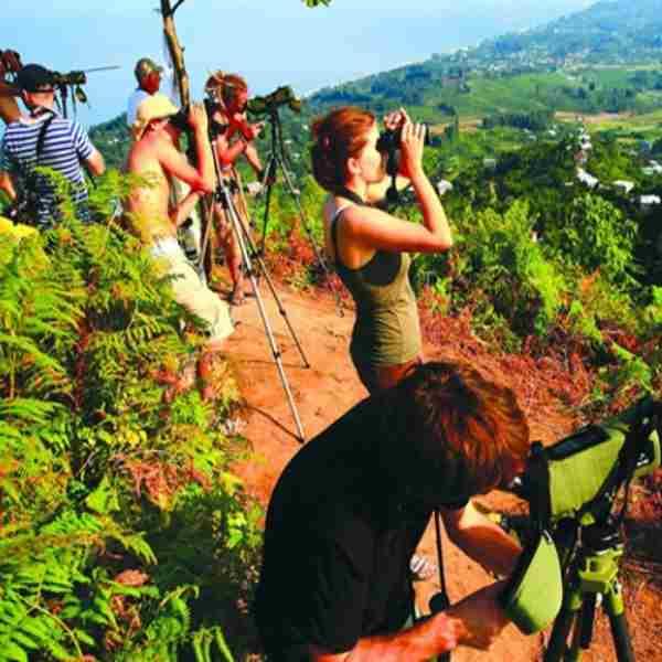 bird-watching-tours-in-georgia-country